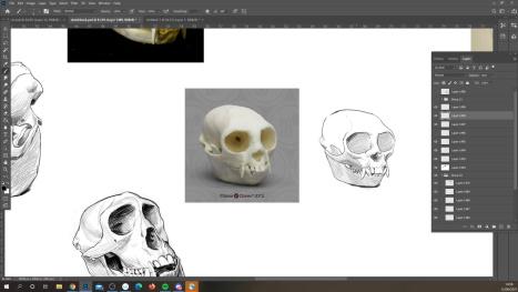 skulls in photoshop